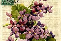 Blommor vintage