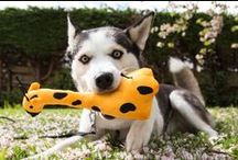 Max - Fun & Toys / Playing or a tasty chew is all a dog can wish for! If you are looking for the best balls, ropes and other challenging toys for dogs? Check our full range of fun & durable dog toys to keep your best friend healthy & happy. Subscribe to our newsletter for more inspiration!