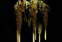 Plants | Amaranthaceae