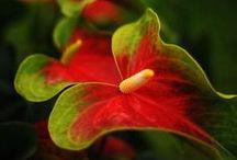 Plants | Araceae