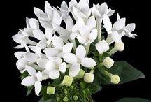 Plants | Rubiaceae