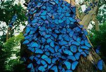 lepkék,pillangók