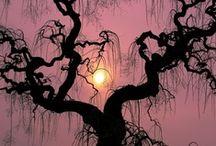 Trees, Beautiful trees! / by Rene' Bennett