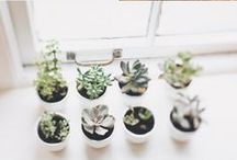 Home styling _ plants & pots