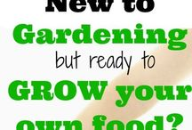 Gardening DIY κηπουρική / Mostly green... Veggies and small gardening, container gardening