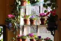 Gardening: Plants and plantings / by Jeanette Griebel