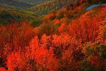 VIRGINIA / by Shirley Lake