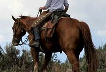 Horsing Around in SC State Parks / Many South Carolina State Parks are open to your larger four legged friends as well. Check out Cheraw, Croft, Givhans Ferry, H. Cooper Black, Hunting Island, Kings Mountain, Lee and Myrtle Beach State Parks!