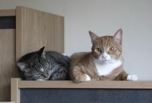 katten/cats