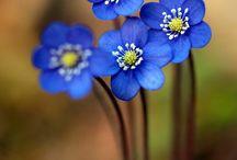 Flowers/plants backyard?
