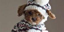 Hondenkleding / Pin mee voor de leukste hondenkleding!!!