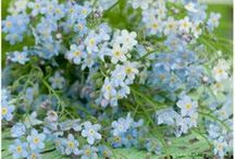 Kukkia  Flowers