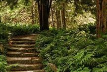 Woodland inspiration