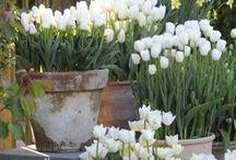 White Garden / by Nete Hojlund