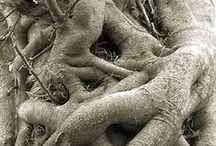 rootsweb / My rootsweb