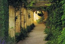 pergolas and climbers, espalier,