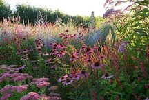 Warm Colour Planting