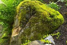 Sammalta  Moss