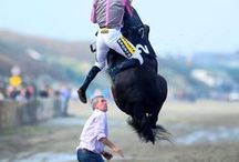 Funny equestrian images