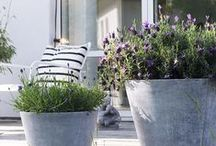 G A R D E N / Inspiration for simple and sustainable garden.