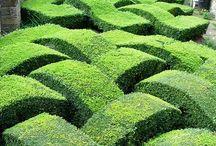 Parterres & Knot gardens