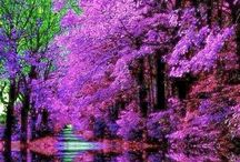 Dream pictures | amazing / Beautiful pictures