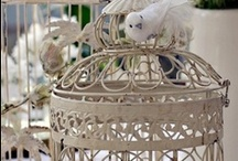 Birdcages / Just birdcages, thats it.