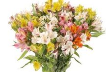 Our Bouquets / These are a sample of some bouquet selections we offer...