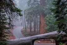 Washington, Oregon, Northern California ;)