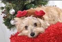 Christmas Pet Safety / Tips for keeping your dogs, cats and other pets safe and happy this holiday season