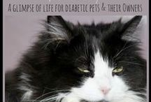 Pets with Diabetes
