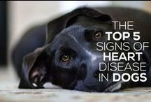 Pet Heart Disease/Cardiology