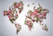 my Flowers ☆★☆