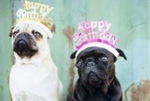 Dog Birthday Parties? Woof! / Pet parties are on the rise, here are a few ideas to throw your fuzzy family member the best party!