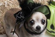Halloween Pet Fun & Safety