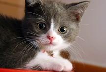 Cute & Lovable Animals