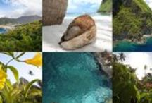 Sugar Beach Flora & Fauna