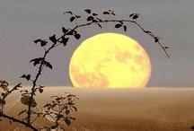 By the light of the moon / by Marilyn Gearren