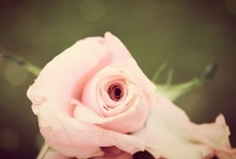 Blooms #1