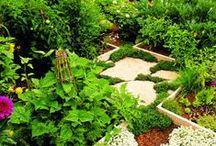 Outdoor- Veggie patch