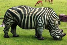 . stripes .