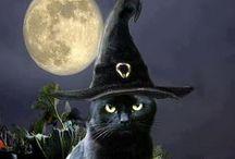 Halloween / by Serita Partin