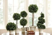 TOPIARY~*~ / I love these works of art and their history from 18th and 19th century English gardens.  A topiary has long been a favorite decorating accessory for inside as well as out.