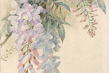 Wonderful Wisteria~*~ / Wisteria is so dramatic and romantic.  Climbing and blooming Wisteria simply takes my breath away!