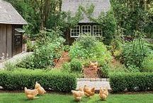 Gardening - Growing Food