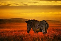 ★ANIMALS and CREATURES of the world!!! / The  exciting and unknown world of nature!!I like in this board that i ''pin and learn'' in the same time, things that i don't know about the ''amazing world'' of animals all over the world!!!