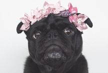 """pugs • / """"There are no bad days when you come home to a pug's love"""""""