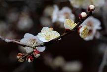 京都御苑(Kyoto, Japan)
