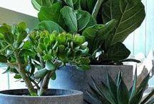 Zimmerpflanzen / Die schönsten Ideen rund um Zimmerpflanzen
