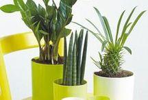 Topfpflanzen / Die schönsten Ideen und Tipps rund um Topfpflanzen
